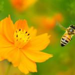 二十年的养蜂经验,教你如何辨认土蜂蜜真假