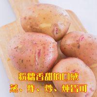 乡村公社 云南红皮土豆黄心宝宝辅食土豆泥马铃薯农家自种新鲜蔬菜批发8斤