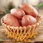 乡村公社 云南特产红皮土豆黄心农家自种小土豆马铃薯洋芋新鲜蔬菜批发 8斤