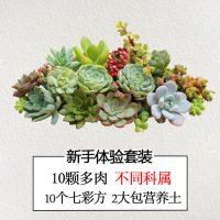 多肉植物组合 办公室桌面DIY迷你盆栽组合桌面微景观套餐